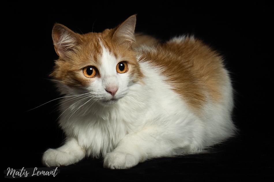 Matis Lemant Fotografa de mascotas gato hamster Hanna momo (10)