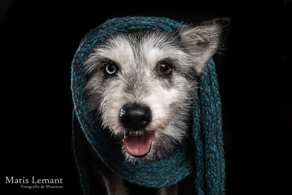 Matis Lemant Fotografia Mascotas Maxi (31)