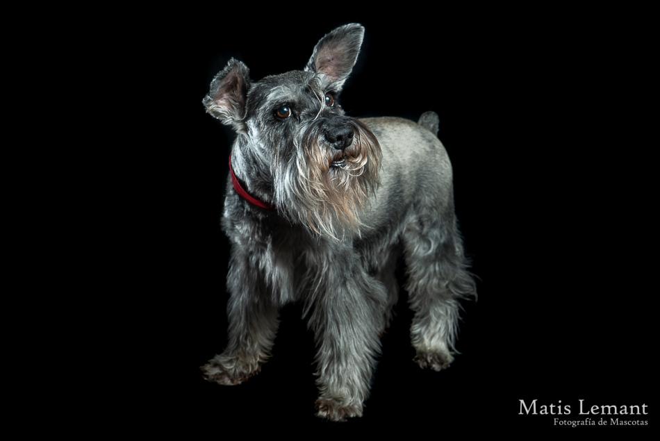 Matis Lemant Fotografia Mascotas Maxi (5)