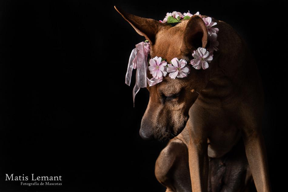 Matis Lemant Fotografia Mascotas Xina (12)