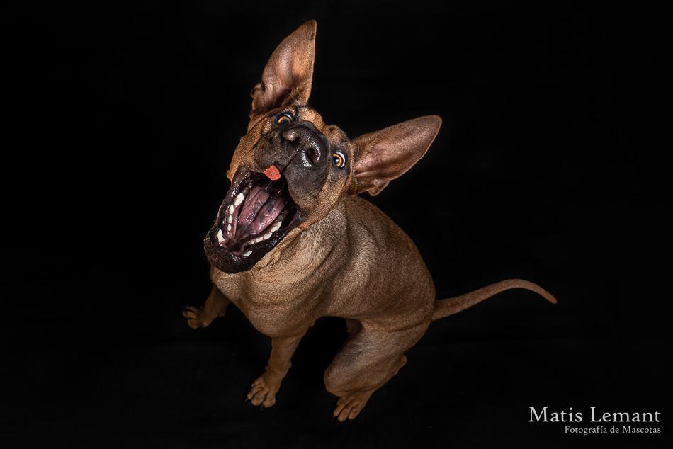 Matis Lemant Fotografia Mascotas Xina (22) - copia