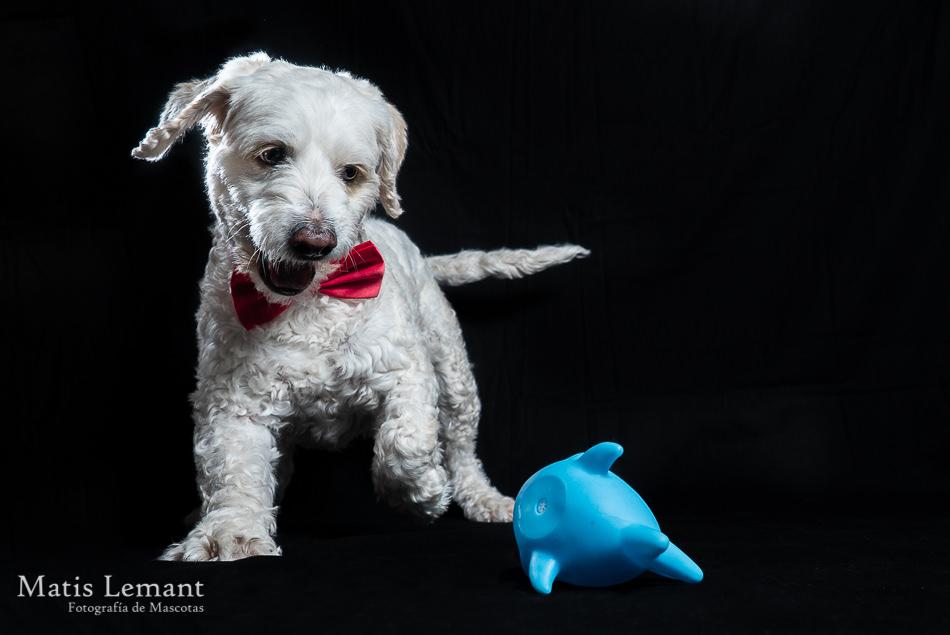 Matis Lemant Fotografia mascotas tenerife Sam (35) - copia
