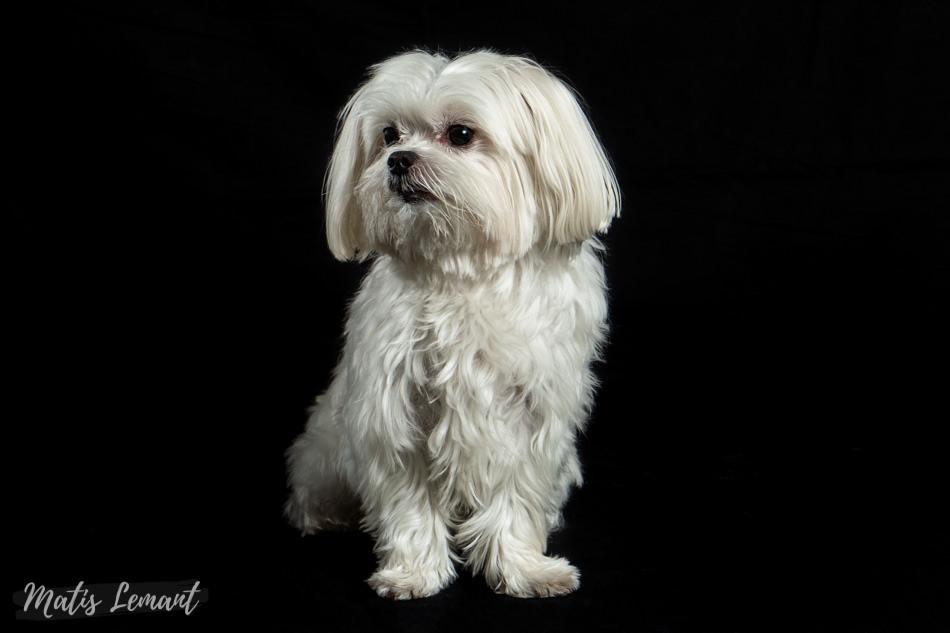 Matis Lemant fotografa mascotas perro Tenerife Lichi (8)