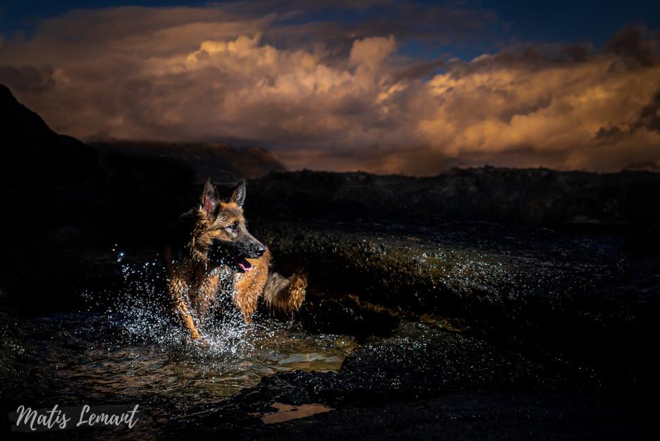 Mia pastor aleman fotografia perro tenerife matis lemant (3)