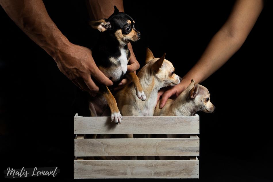 Sesion canina Tenerife